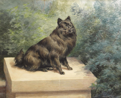 Art Prints of Portrait of a Schipperke by Edmund Henry Osthaus