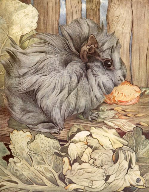 Art Prints of Guinea-pigs by Edward Julius Detmold