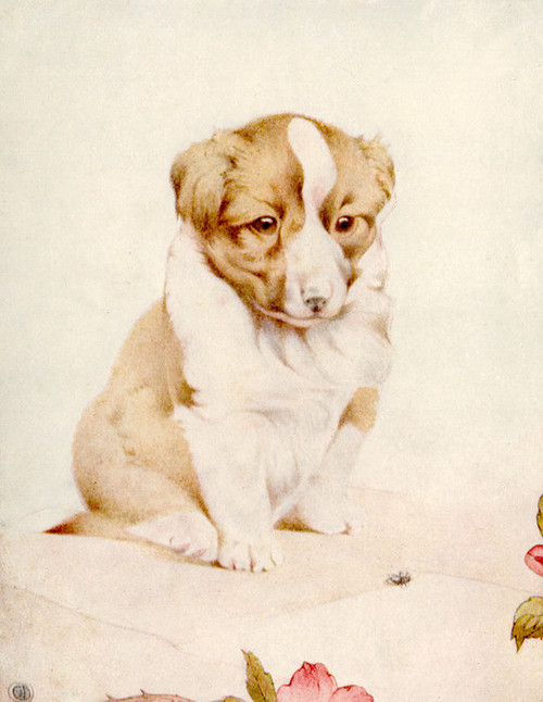 Art Prints of Puppies by Edward Julius Detmold