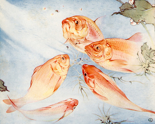 Art Prints of Goldfish by Edward Julius Detmold