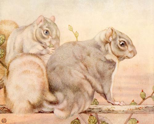 Art Prints of Squirrels by Edward Julius Detmold