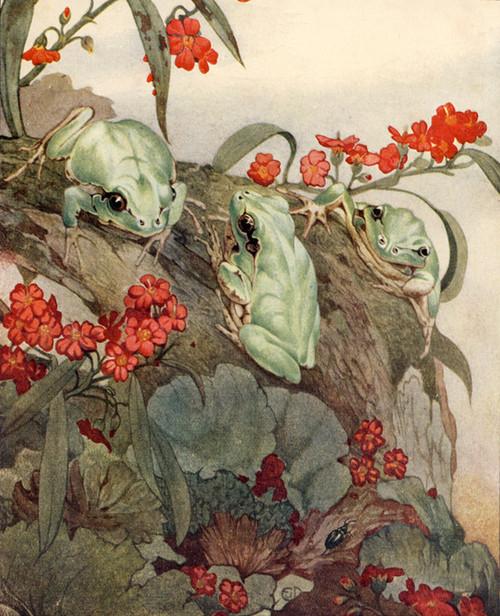 Art Prints of The Green Tree Frog by Edward Julius Detmold