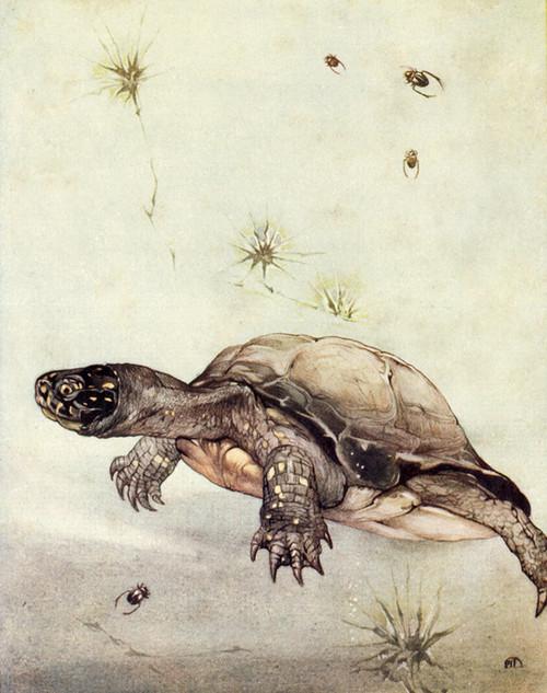 Art Prints of Tortoises by Edward Julius Detmold