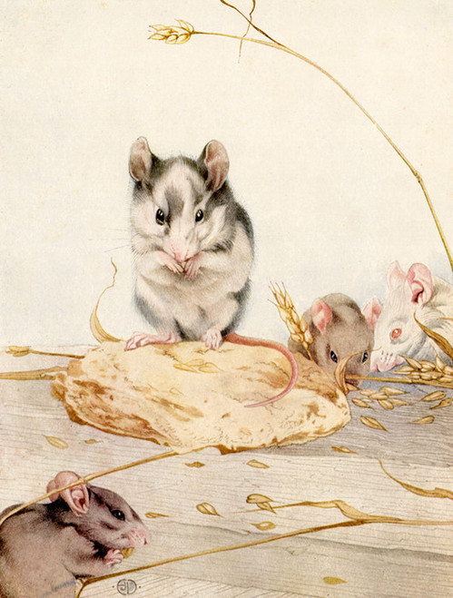Art Prints of White Mice by Edward Julius Detmold