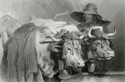 Art Prints of Oxen at the Tank Geneva by Edwin Henry Landseer