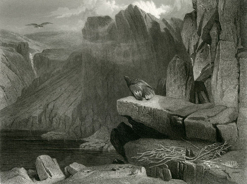 Art Prints of The Eagle's Nest by Edwin Henry Landseer
