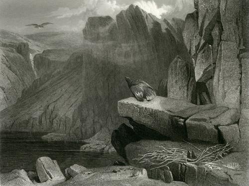 Art Prints of The Eagle's Nest by Edwin Henry Landseer