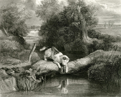 Art Prints of The Dog and the Shadow by Edwin Henry Landseer