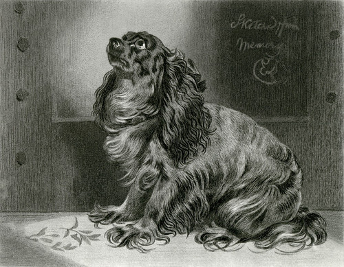 Art Prints of The Pet of the Duchess by Edwin Henry Landseer