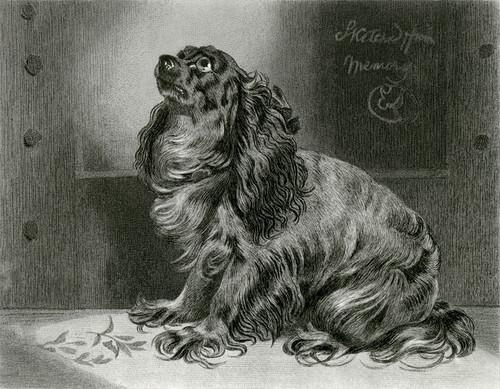 Art Prints of The Pet of the Duchess by Edwin Henry Landseer