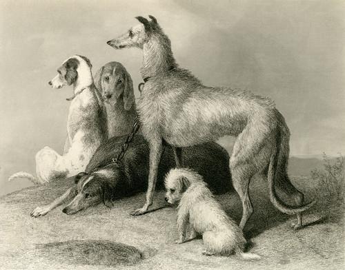Art Prints of Waiting by Edwin Henry Landseer