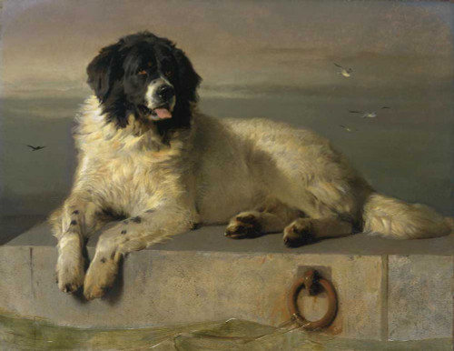 Giclee print of A Distinguished Member of the Humane Society by Edwin Henry Landseer