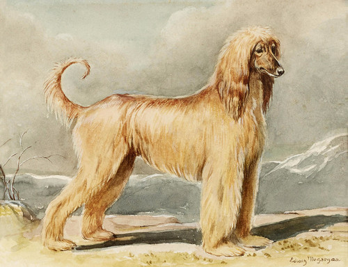 Art Prints of An Afghan Hound in a Landscape by Edwin Megargee