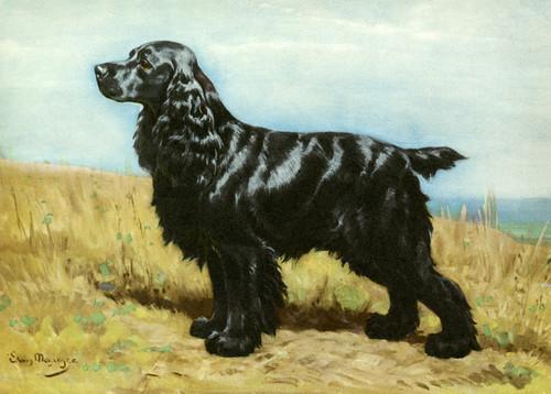 Art Prints of Black Cocker Spaniel by Edwin Megargee
