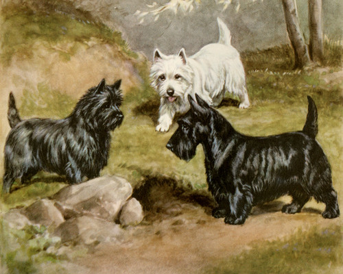 Art Prints of Cairn, West Highland White and Scottish Terriers by Edwin Megargee