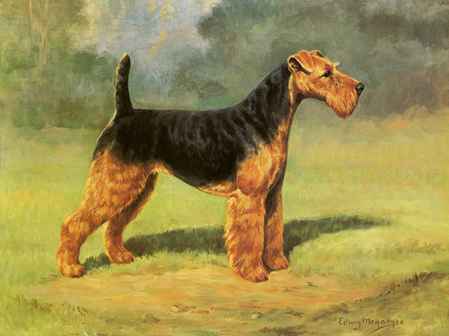 Art Prints of Champion Twin Ponds Bell, Airedale Terrier by Edwin Megargee