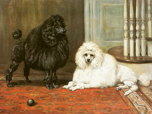 Art Prints of Champion Bonnie Brighteyes and Blakeen, Poodles by Edwin Megargee