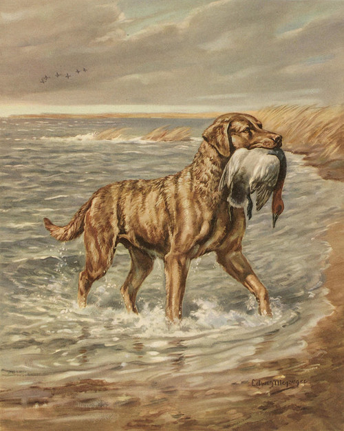 Art Prints of Chesapeake Bay Retriever by Edwin Megargee