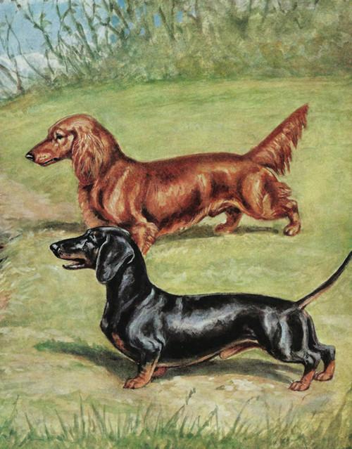 Art Prints of Dachshunds by Edwin Megargee