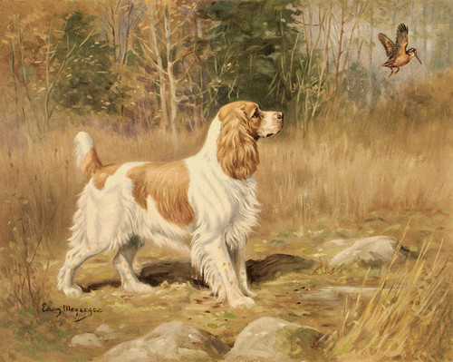 Art Prints of Cocker Spaniel by Edwin Megargee