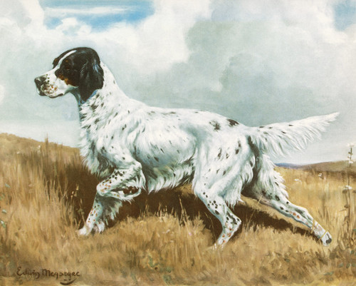 Art Prints of English Setter by Edwin Megargee