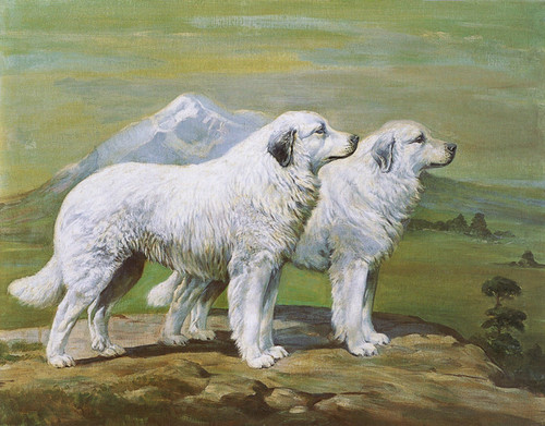 Art Prints of Champions of Basquaerie, Great Pyrenees by Edwin Megargee