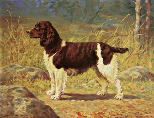 Art Prints of English Springer Spaniel by Edwin Megargee