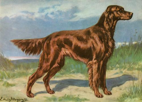 Art Prints of Irish Setter by Edwin Megargee