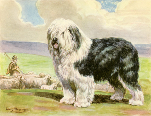 Art Prints of Old English Sheepdog by Edwin Megargee