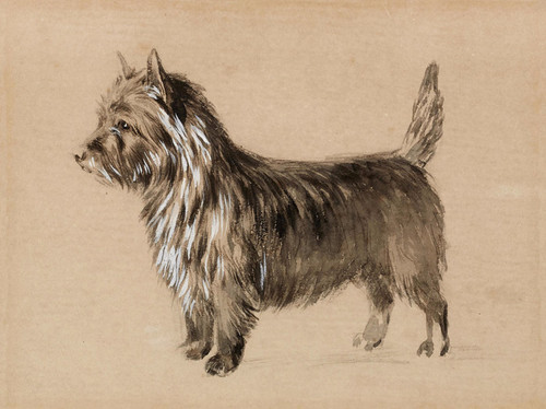Art Prints of Portrait of a Cairn Terrier of Tapscott Kennel by Edwin Megargee