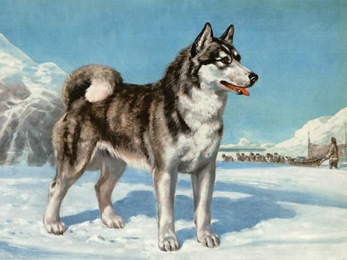 Art Prints of Siberian Husky by Edwin Megargee
