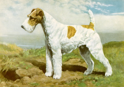 Art Prints of Wire Haired Fox Terrier by Edwin Megargee