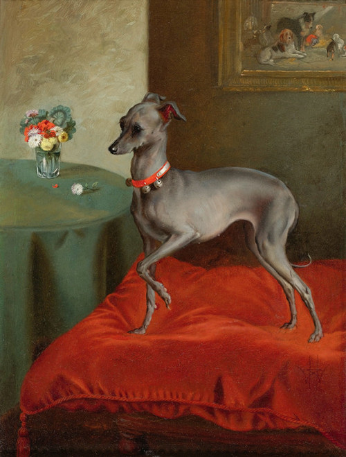Art Prints of An Italian Greyhound on a Red Cushion, English School