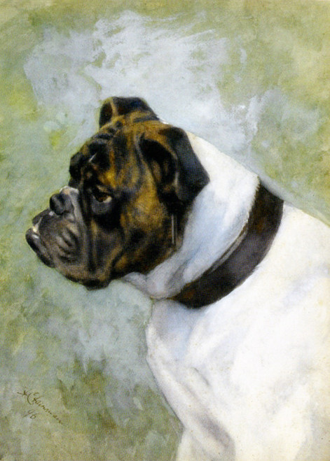 Art Prints of Brindle and White Bulldog by Frances Fairman