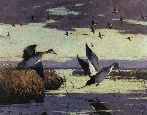 Art Prints of Flying Pintails by Frank Weston Benson