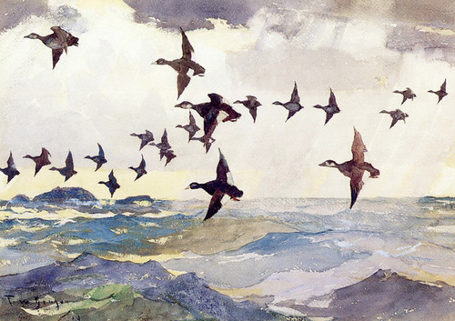 Art Prints of Scoters over Water by Frank Weston Benson