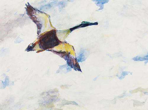 Art Prints of Shoveller Drake in Flight by Frank Weston Benson