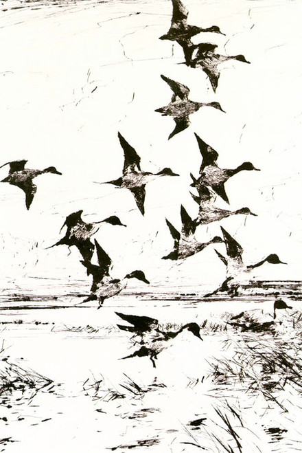 Art Prints of Pintails Passing by Frank Weston Benson