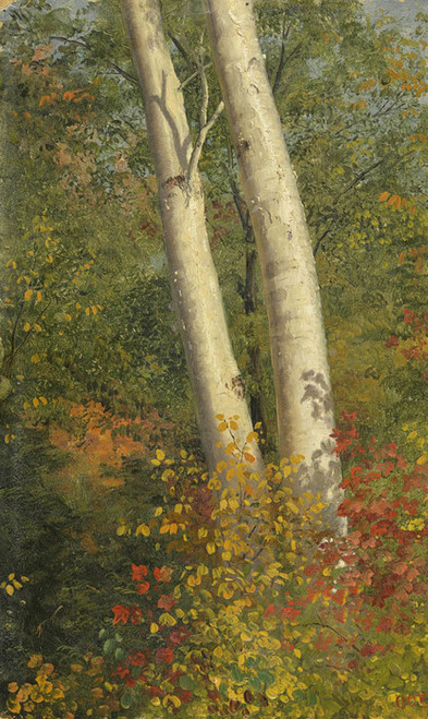 Art Prints of Birch Trees in Autumn by Frederic Edwin Church