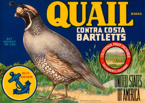 Art Prints of 029 Quail Contra Costa bartletts, Fruit Crate Labels