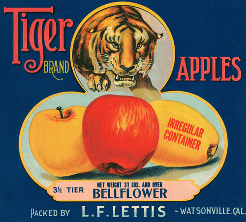Art Prints of 055 Tiger Apples, Fruit Crate Labels