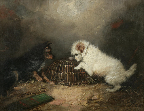 Art Prints of |Art Prints of Terriers with a Caged Rat by George Armfield