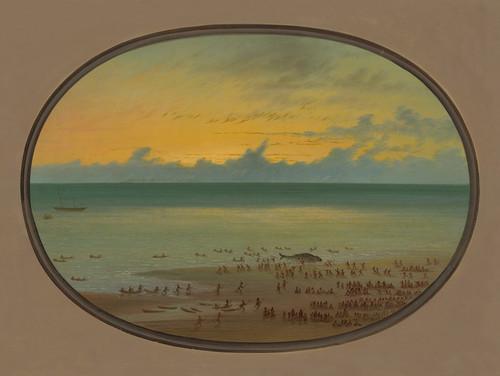 Art Prints of A Whale Ashore, Klahoquat by George Catlin