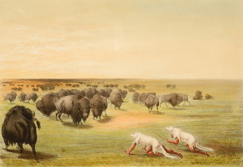 Art Prints of Buffalo Hunt, Under the White Wolf Skins by George Catlin