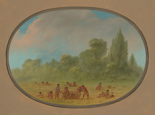 Art Prints of Caddoe Indians Gathering Wild Strawberries by George Catlin