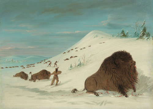Art Prints of Buffalo Lancing in the Snow Drifts Sioux by George Catlin