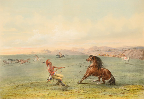 Art Prints of Catching the Wild Horse Lithograph by George Catlin