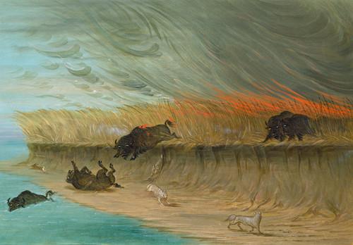 Art Prints of Prairie Meadows Burning by George Catlin