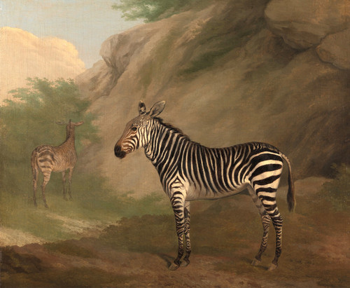 Art Prints of Zebra by George Morland