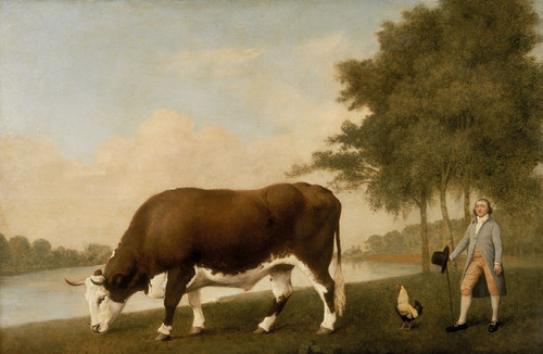 Art Prints of A Lincolnshire Ox by George Stubbs